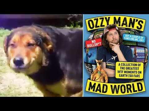 Thumbnail: Ozzy Man Reviews: Dogs Referee Cats + BOOK Announcement