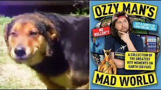 Ozzy Man Reviews: Dogs Referee Cats + BOOK Announcement