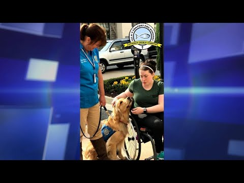 How Do Canine Comfort Dogs Help Patients?