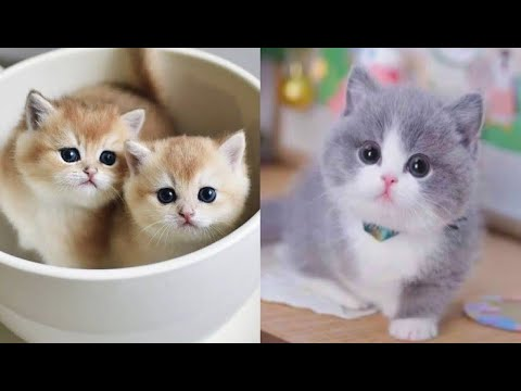 Cats 😻 - Cute and Funny 😁Cats😻  Videos 72 #2020 #cats #dogs #Compilation | Funny Pet Channel