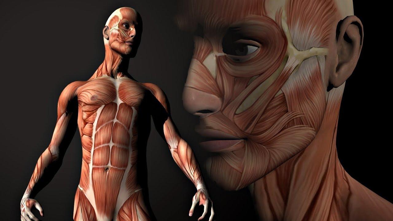 decontaminarea corpului uman