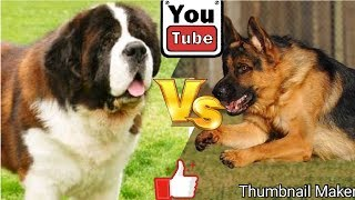 Немецкая овчарка против Сенбернара. Собаки. Батл собак. Animals Battle.