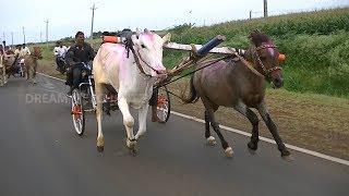 Horse and Bull Cart Race jodatti .घोडा बैल गाडीचा शर्यत.Pferd Ochsenkarren Rennen.