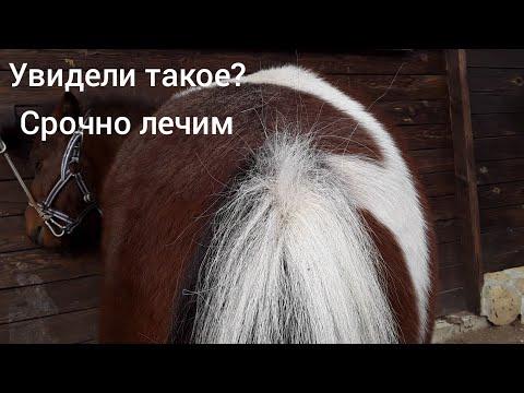 Лошадь / У Коня Глисты? Как Узнать / Чем Лечить. Как Часто Глистовать.