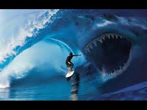 Shark Attacks Surfer Mick Fanning Amp Surf Music Dick Dale