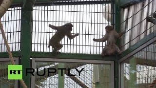 Ленинградский зоопарк получил в подарок к 150-летию японских макак
