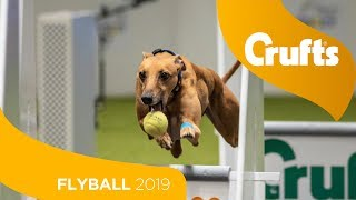 Flyball  Team Final | Crufts 2019