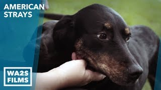 Pam Porteous Tried To Save A Burned Puppy - Now She Changes Dogs Lives Forever - ANIMAL CARE NETWORK