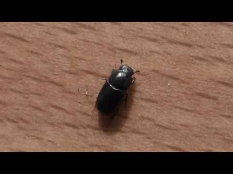 Поймал в покупном торфе подозрительного жука