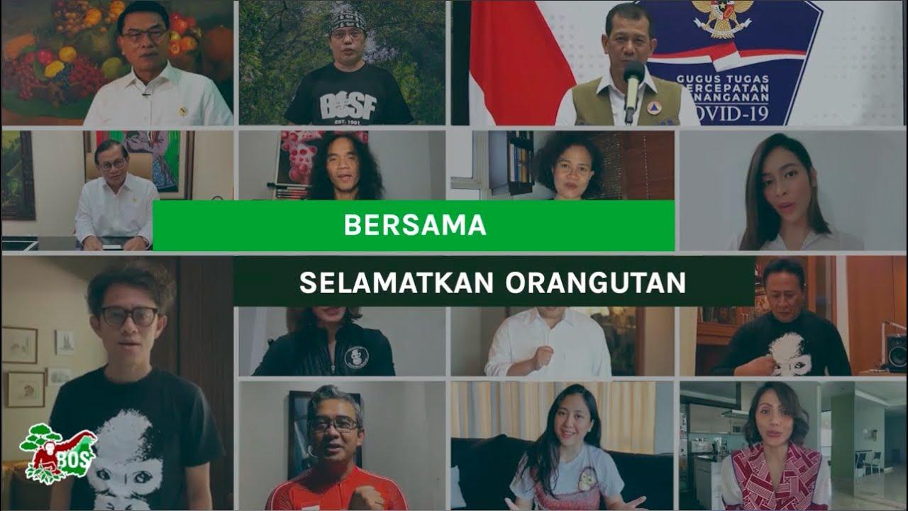 Together, We Save Orangutans