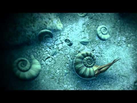Ammonites