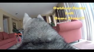 GoPro Camera On My Outdoor Husky Left Home Alone!!