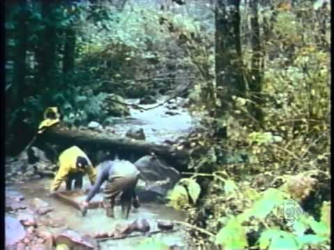 MOSSOM CREEK Centennial School Salmon Project in SALMON ON THE LINE, Nature of Things 1983