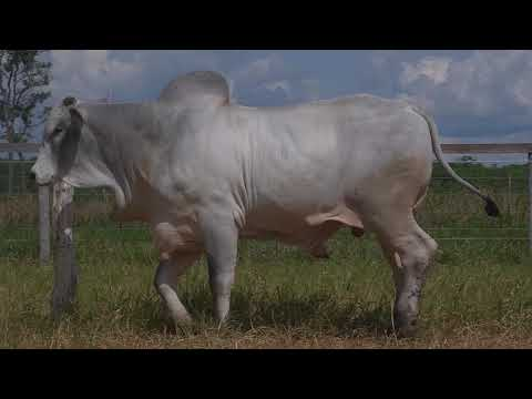 LOTE 151   GPO A 3720