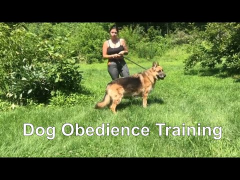 dog-training-basic-obedience-lesson-plan---dog-training-techniques