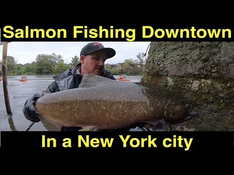 Salmon FIshing Downtown In A New York City