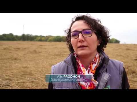 Chambre d agriculture de la haute marne 52 le chanvre une bonne alternative agricole youtube - Chambre agriculture haute saone ...