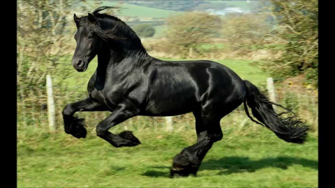 Martinho Pereira - Cavalo de Guerra - YouTube