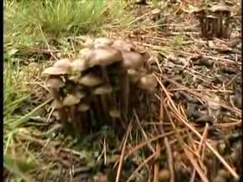 The Hunt for Wild Magic Mushrooms 4 of 4