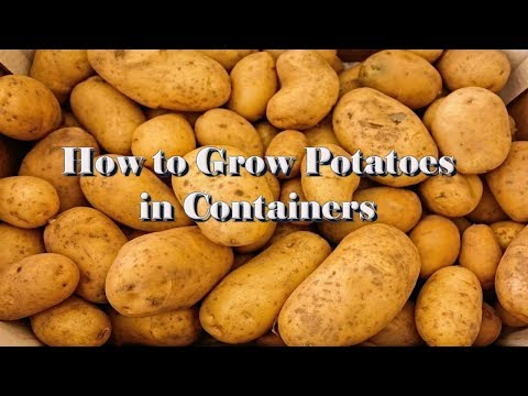 How to Grow Potatoes in Containers - Part 1