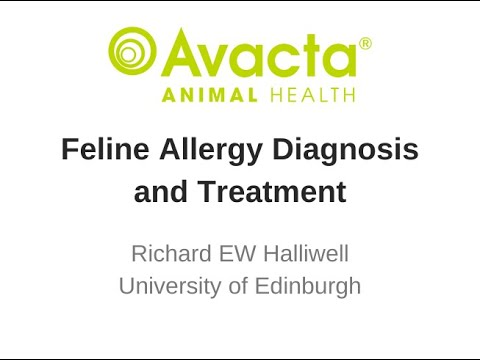 Image Result For Cat Asthma