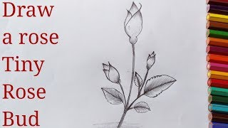 How to draw a rose,how to draw a rose bud, 2019, step by step,quick and easy