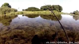 видео Fish XXL