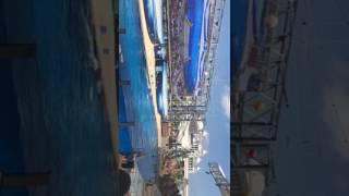 Шоу дельфинов 1 часть