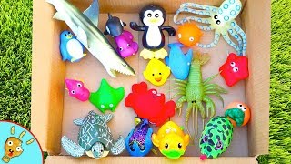 Learn SEA ANIMALS! Video Footage of Sea Animals by Squishee Nugget