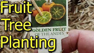 Planting More Types of Fruit Trees & How to Dig a Hole - With Tips!