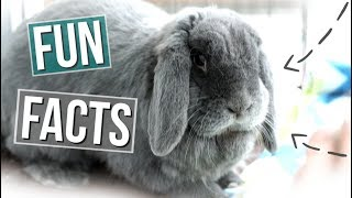 15 Fun Facts About Rabbits