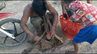 Net fishing tour in cambodia by net step  by step by khmer HD 2017 step 05