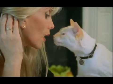 Вопрос: Существуют ли в дикой природе свободно живущие кошки?