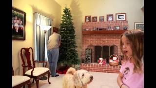Time Lapse Putting Up The Christmas Tree- Cardwell Style 2012