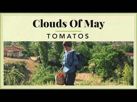 Clouds of May - Tomatos