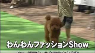 今年の4月19日に松戸市の小金原中央商店街で行われた、第一回わんわんフ...