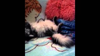 Кот дергается во сне под музыку