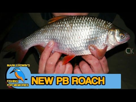 Roach Fishing The Thames (Video 45)