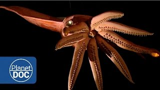 Proyecto Kraken. En busca del Calamar Gigante | Documental Completo - Planet Doc