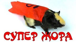 СУПЕР ЖОРИК спешит на помощь ОГРАБЛЕНИЕ Морская свинка ПОЁТ Видео для детей