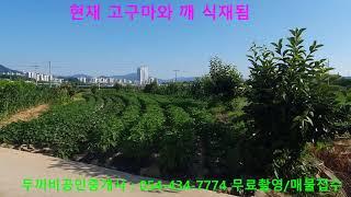김천토지 남면 초곡리 141평 주말농장, 텃밭 혁신도시…