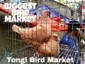Tongi Bird Market || Biggest bird market || Near Dhaka || Bangladesh