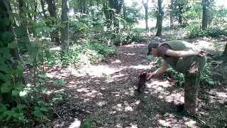 Трюфели обучение-Training - Truffle Hunting Dogs