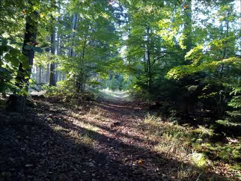 Alone In The Canadian Wilderness (Full Version) from YouTube · Duration:  51 minutes 8 seconds