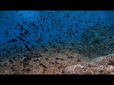Diving around Bunaken National Marine Park (HD)