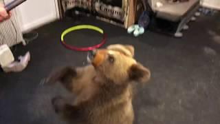 Медведь первый раз дунул.