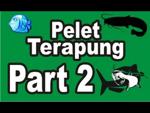 Cara Pembuatan Pelet Ikan Terapung - part 2