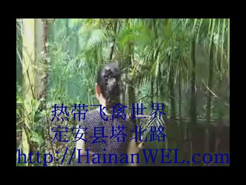 Park of exotic tropical birds on the island of Hainan near Haikou, China