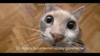 Смешные фото котов.
