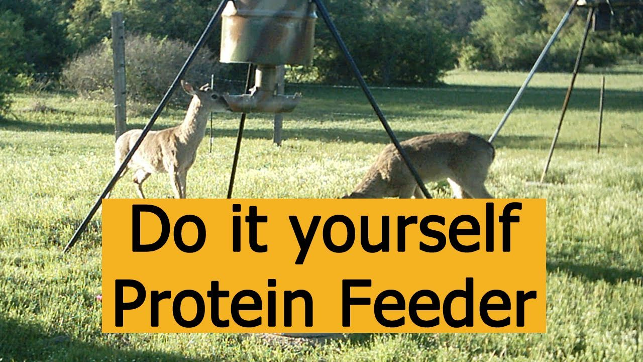 Do it Yourself Protein Deer Feeder Design for Hunting